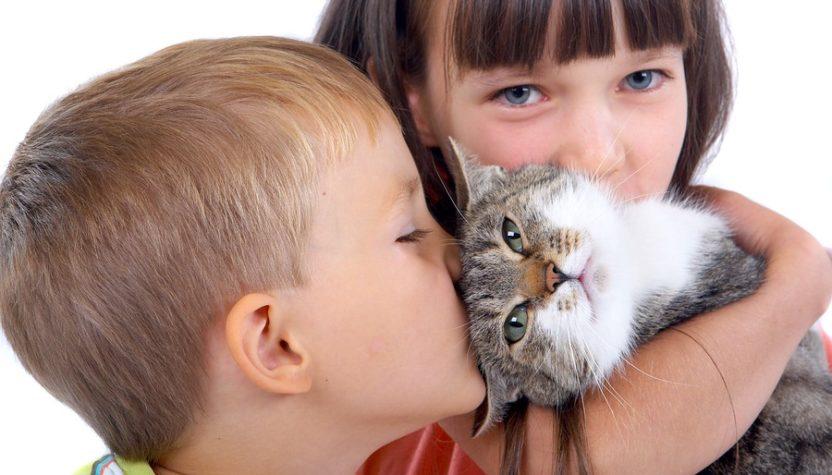 выбрать кошку для ребенка
