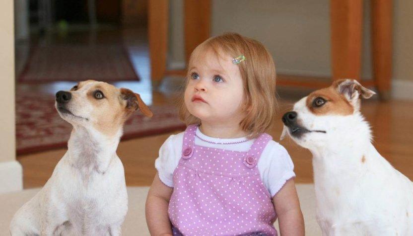 Ребенок просит завести домашнего питомца